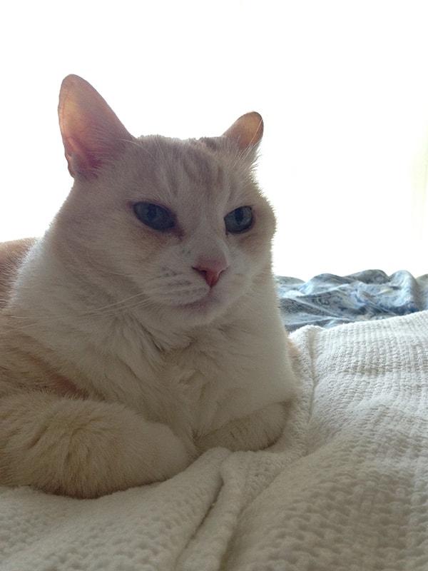 今回使用する猫の写真