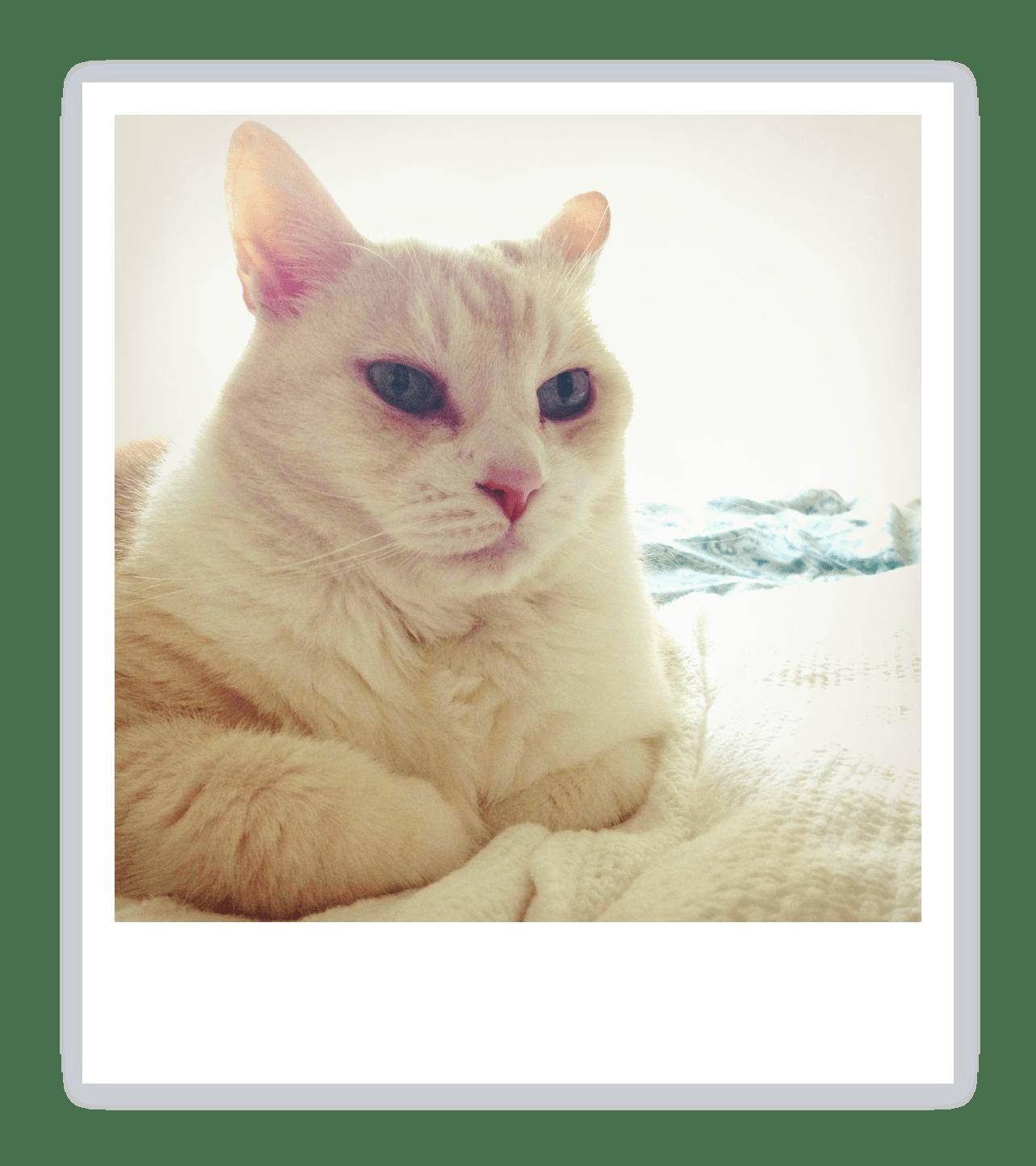 不機嫌な猫がやわらかい雰囲気の猫に